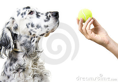 Playing with dog