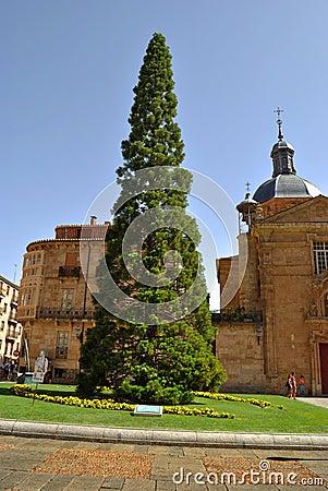 Plaza de los Anaya in Salamanca