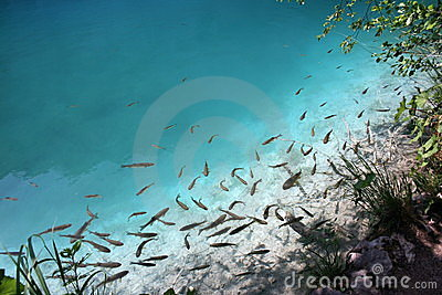 Plenty of fishes in clear water
