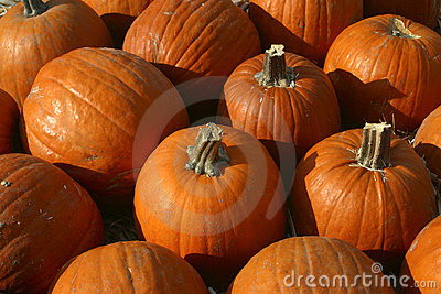 Plethora of Pumpkins