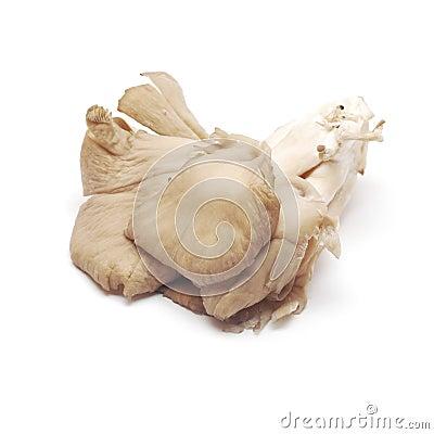 Pleurotus