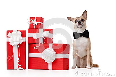 Pálido - o doggy amarelo senta-se perto dos presentes