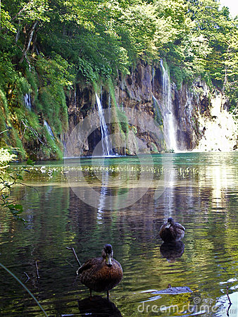 Free Plitvice Lakes, Waterfall And Ducks Royalty Free Stock Images - 57366169