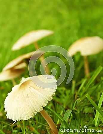 Plocka svamp wild