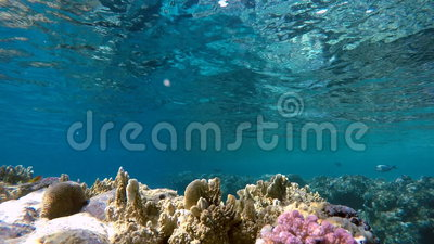 Plongeur et poissons Poissons exotiques banque de vidéos