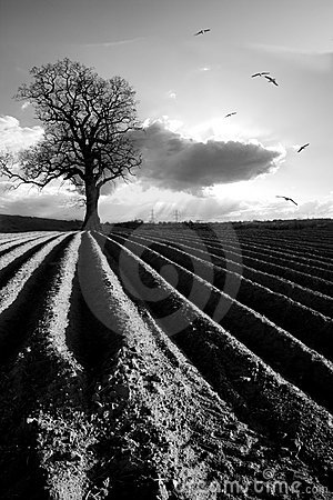Free Ploughed Field Stock Image - 10241701