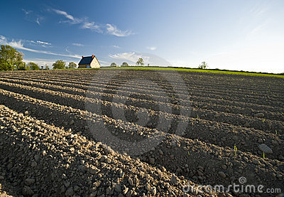 Ploughed field and house
