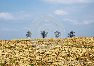 Ploughed field, spring, trees on horizon