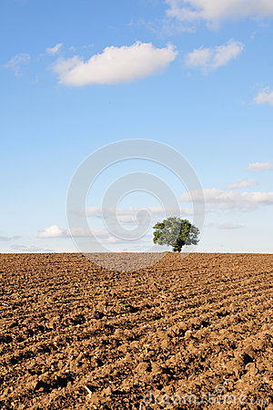 Plowed Farmland