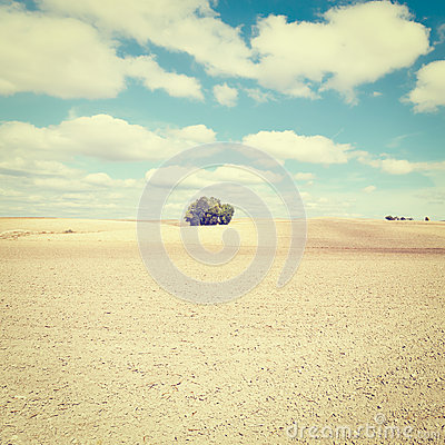 Free Plowed Field Stock Images - 49642214