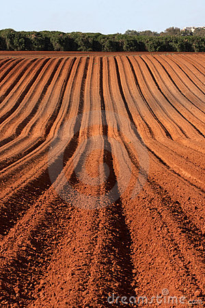 Free Plowed Field Royalty Free Stock Photo - 5425675