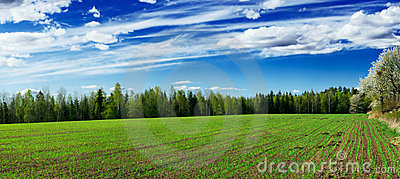Plowed field of crops