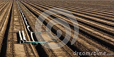 Plowed Field Rows