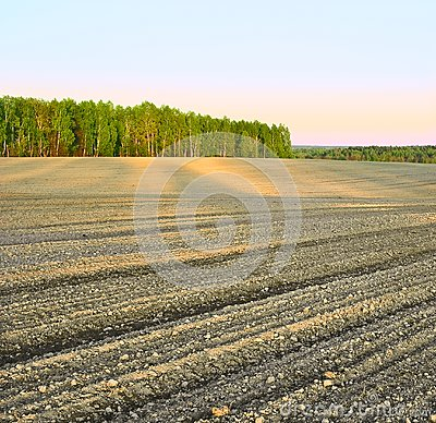 Plowed field at sunset