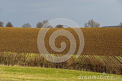Plowed field in winter