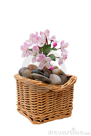 Plum blossom in basket