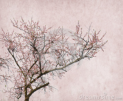 Plum blossom on old antique vintage paper