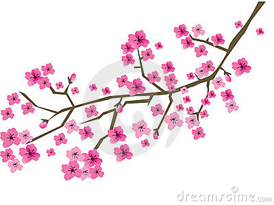 Plum branch in blossom