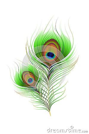 Pluma colorida del pavo real