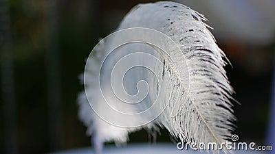Pluma con una pluma en el viento almacen de metraje de vídeo