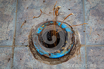 how to keep roots out of sewer lines