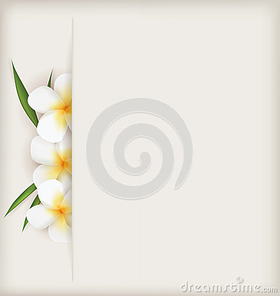 Plumeria flowers background