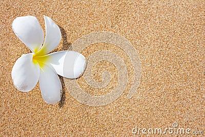 Plumeria flowers on beach