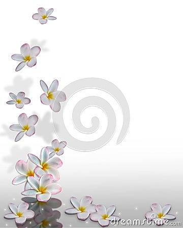 Plumeria Flowers Corner Design