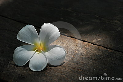 Plumeria flowers under sunlight on wood board