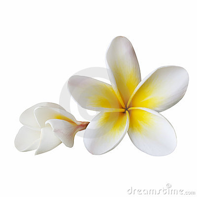 Free Plumeria (with Path) Stock Image - 14855801