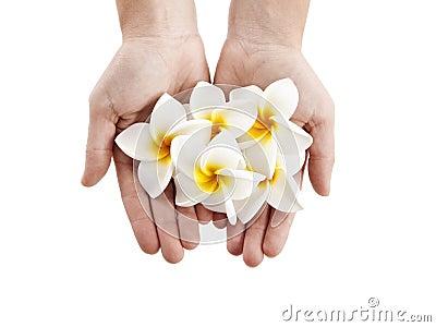 Plumerias flowers