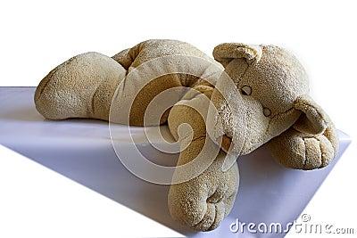 The plush sleeping bear - cub