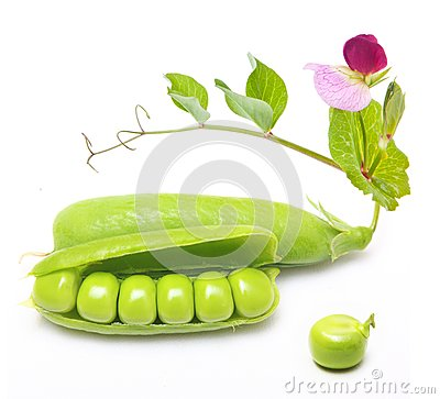 Pod of green peas