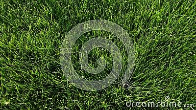 Podlewanie trawą w ogrodzie Inteligentny ogród aktywowany z pełnym automatycznym systemem nawadniania zraszaczy działającym w zie zbiory wideo
