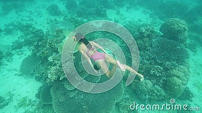 Podwodny widok kobiety w seksownym stroju pływającym w pobliżu koralowców zdjęcie wideo