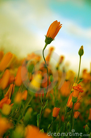 Free Poetic Flower Royalty Free Stock Images - 71389