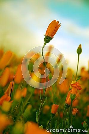 Poetic Flower