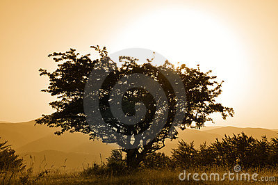 Poetic tree