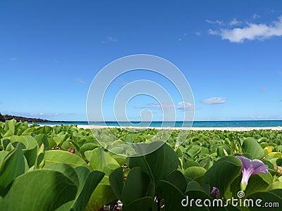 Pohuehue beach on Big Island, Hawaii