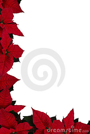 Free Poinsettia Border Royalty Free Stock Image - 12268146