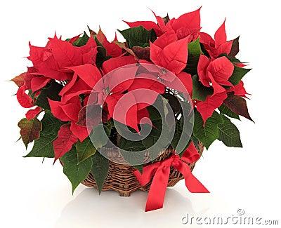Poinsettia Flower Arrangement