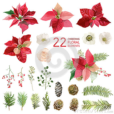 Free Poinsettia Flowers And Christmas Floral Elements - In Watercolor Royalty Free Stock Photos - 78886708