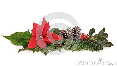 Poinsettia y fauna del invierno
