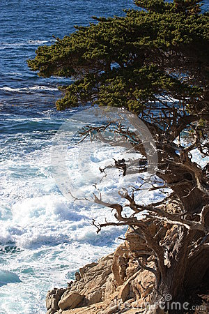 Point Lobos State Park