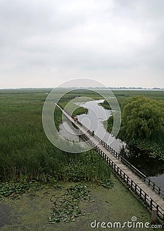 Point Pelee Swamp Boardwalk
