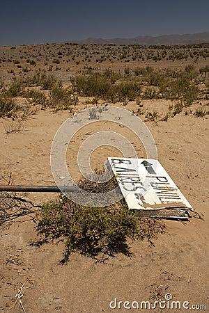 Pointer in desert