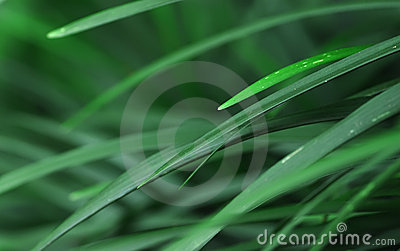 Pointy tropical leafs
