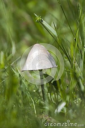 A poisonous mushroom