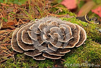 Poisonous mushrooms.