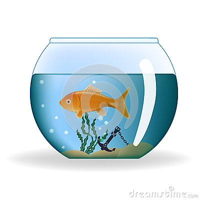 Aquarium Rond Poisson 28 Images Comment Entretenir Un
